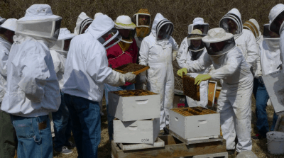 Many beekeepers checking frames and bees in hive boxes