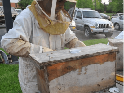 Beekeeper checking nuc box on nuc arrival day